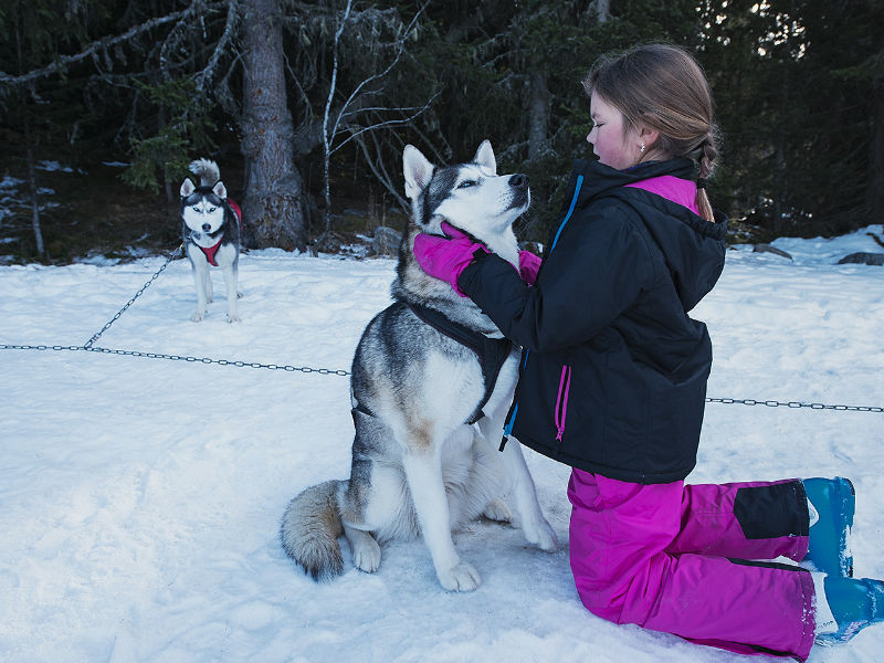 Caresser les Huskies à Méribel